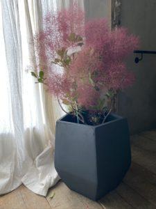 岐阜市花屋 グリーンヴェール  スモークツリー 煙の木 鉢花