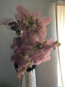 岐阜市花屋 グリーンヴェール  スモークツリー 煙の木